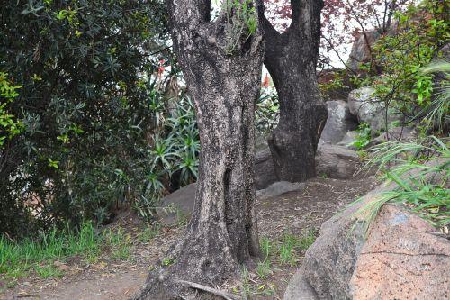 tree boot hill