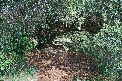 Tree Overhanging Rock