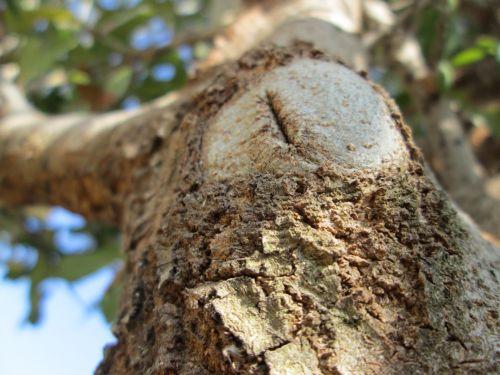 makro, mediena, medis, augalas, augmenija, dalis, mažas, gamta, medžio dalis 3