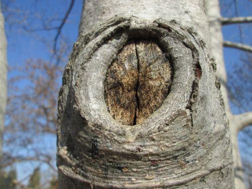 Tree Part Macro 13