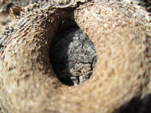 Tree Part Macro 28
