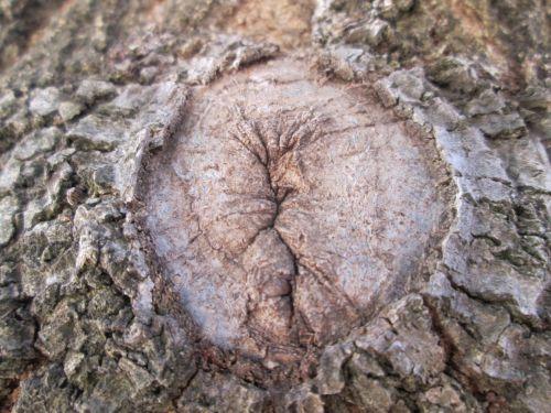 Tree Part Macro 29