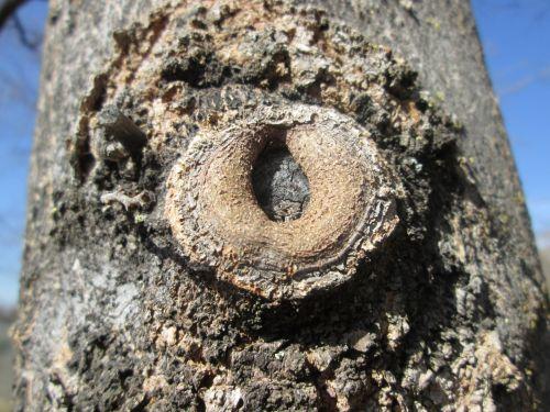 makro, mediena, medis, augalas, augmenija, dalis, mažas, gamta, medžio dalis makro 30