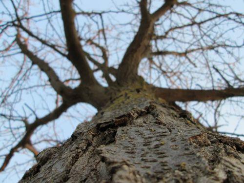Tree Perspective 11