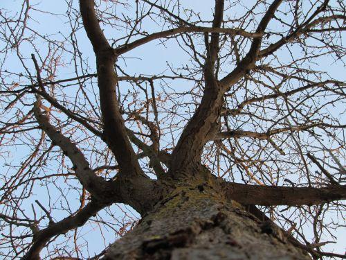 Tree Perspective 12