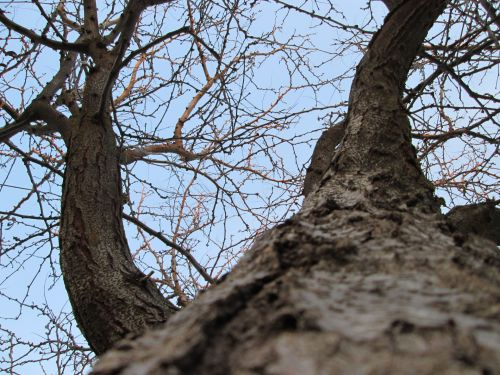 Tree Perspective 18