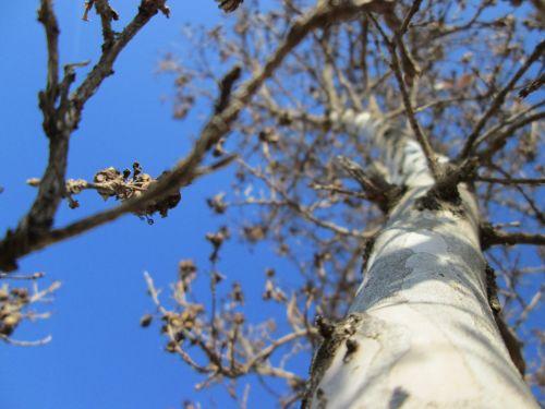 Tree Perspective 21
