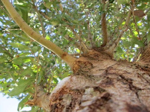 Tree Perspective 22