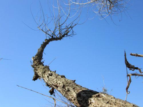 Tree Perspective 33