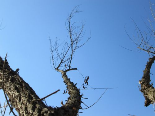 Tree Perspective 34