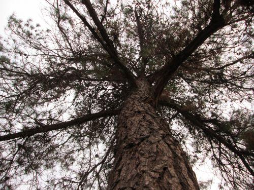 Tree Perspective 39