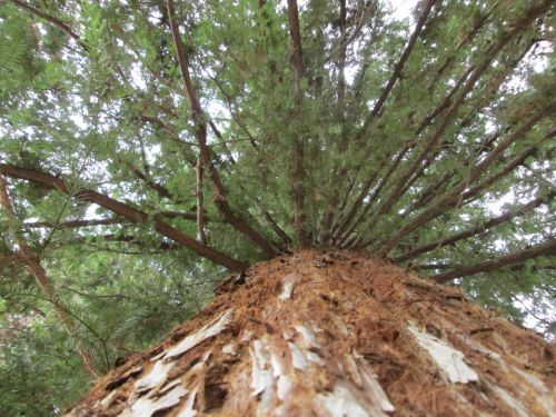 Tree Perspective 43