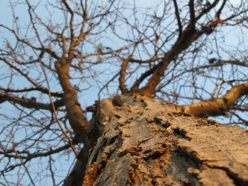 Tree Perspective 7