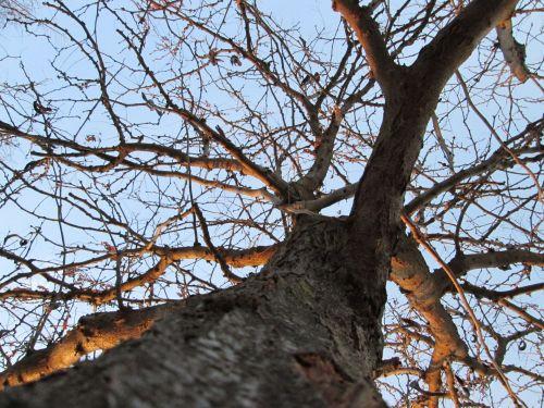 Tree Perspective 8