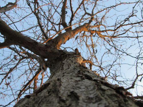 Tree Perspective 9