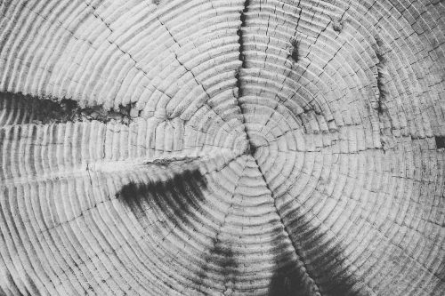 tree-rings annulus annual rings