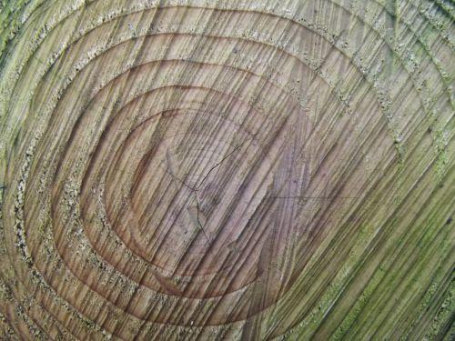 Tree Rings Of Life