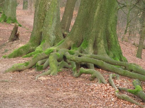tree root root tree