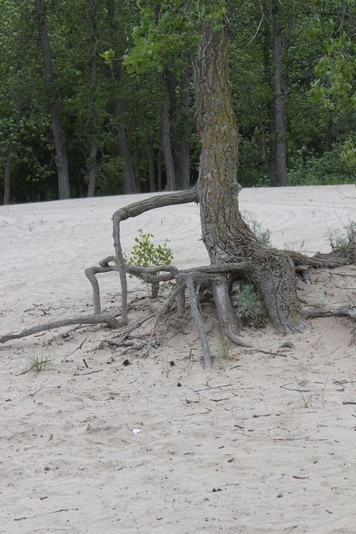 tree roots nature resistance