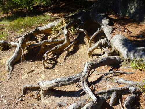 tree roots root system nature