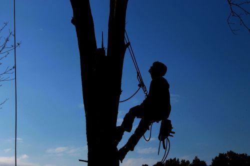 tree service hard work lumberjack