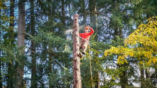tree service  landscaping  service