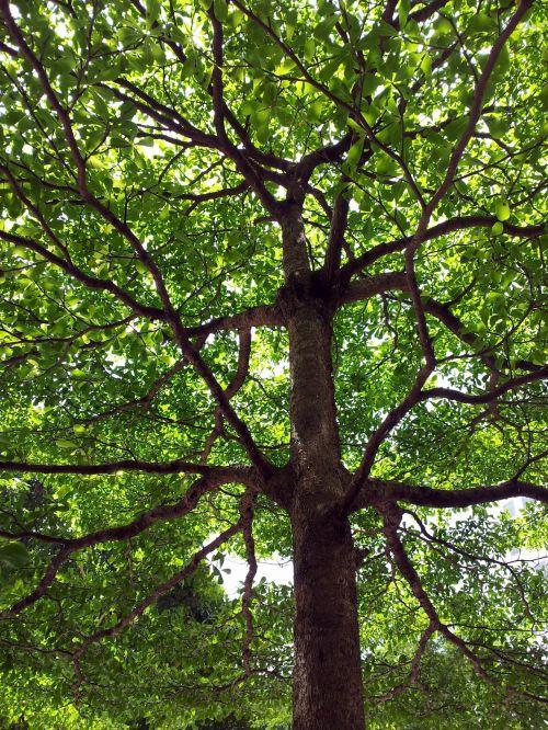 Tree Stem 3 Levels