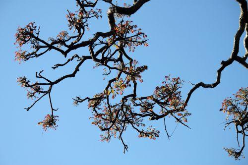Tree Stem On Blue Sky