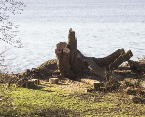 tree stump tree tree at the lake