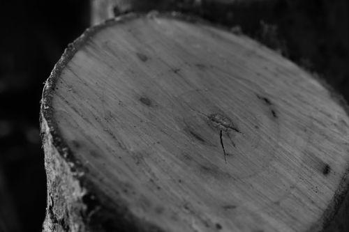 tree stump stump tree