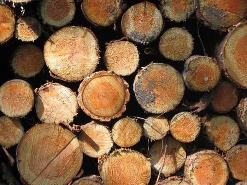 tree stump bark forest