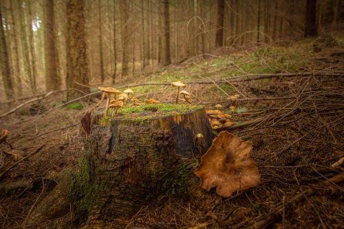 tree stump brown green