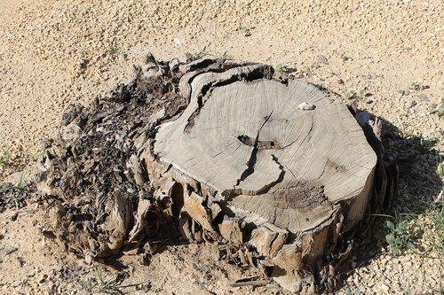 tree stump  desert  dry