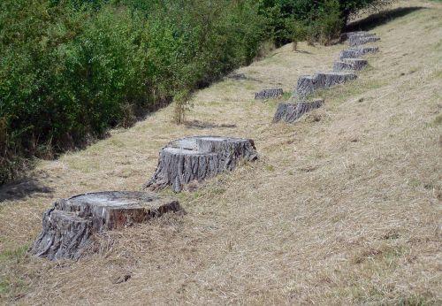 tree stump tree wood