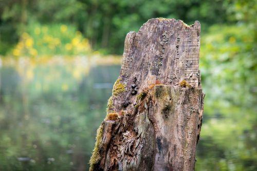 tree stump tree fracture