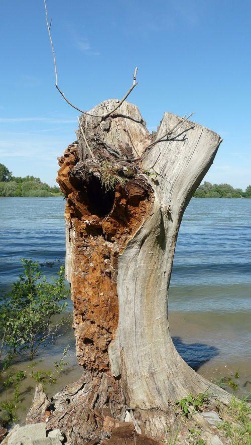 tree stump tree weathered
