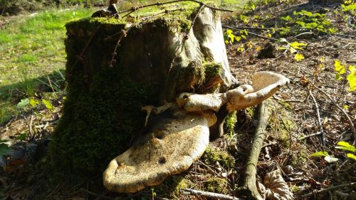 tree stump mushroom forest floor