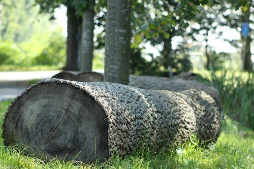 tree stumps  forest  nature