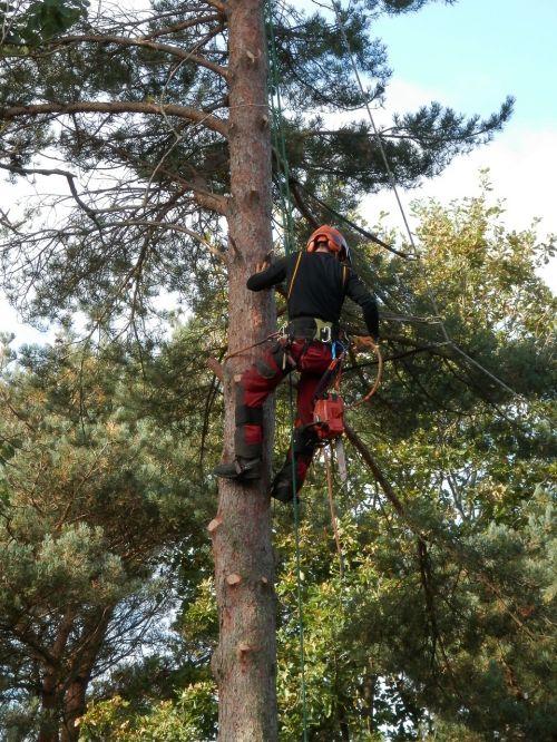 tree surgeon tree logger lumberjack