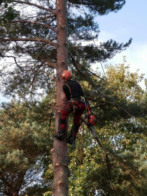 tree surgeon tree logger chainsaw
