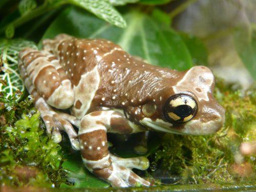 tree toad tree frog caves anuran tree frog