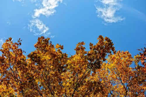 tree top tree autumn tree