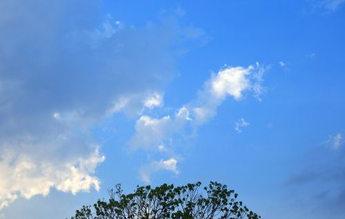 Tree Top And Clouds