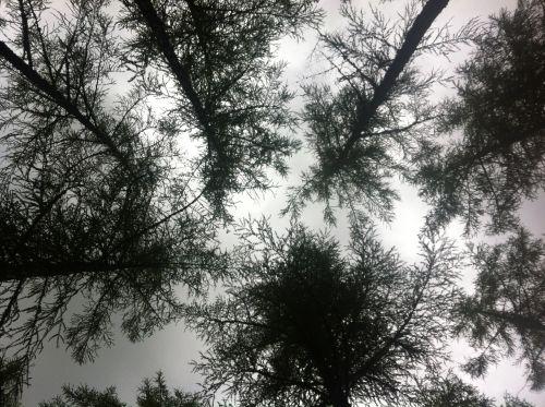 tree tops unusual perspective