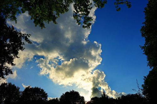 tree tops sky clouds