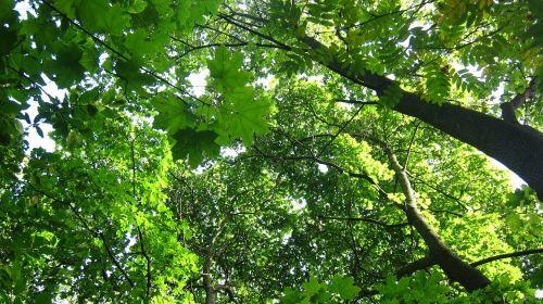 tree-tops deciduous trees greenery