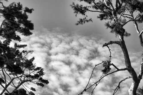 Tree Tops And Clouds