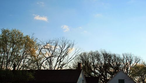 Tree Tops And Roof Tops