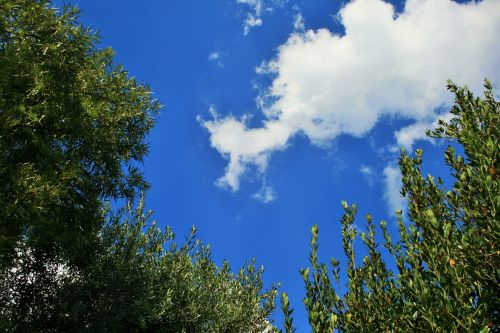 Tree Tops With Sky And Clouds