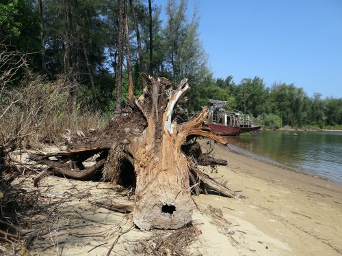 tree trunk fallen estuary